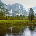 Yosemite Rain by Dena Baker