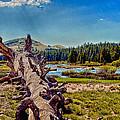 Yosemite Tuolumne Meadows by Bob and Nadine Johnston