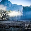 Yosemite Valley by Misty Tienken