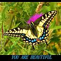 You Are Beautiful by Gallery Of Hope