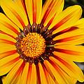 You Are My Sunshine by Deb Halloran