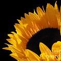 You Are My Sunshine by Emily Muzak and Art