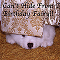 You Can't Hide Birthday Card by Ginny Barklow