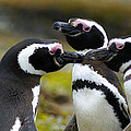 You May Kiss The Bride - Penguins by DerekTXFactor Creative