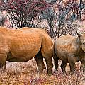 You Watch My Back And I Will Do The Same For You by Douglas Barnard