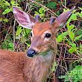 Young Buck by Paul Smith