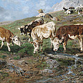 Young Cattle In Tyrol by Mountain Dreams