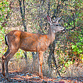 Young Doe by Jim Thompson