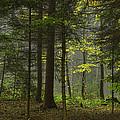 Young Forest by Christine Czernin-Morzin