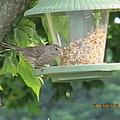 Young Gray Bird by Tina M Wenger