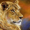 Young Lion by Lucie Bilodeau