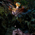 Young Lonely Mushroom by Douglas Barnett
