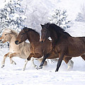 Young Stallions by Dianne Meinke