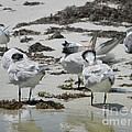 Young Terns Siesta