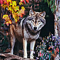 Young Timber Wolf by Les Palenik