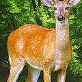 Young Whitetailed Deer Buck Digital Art by A Gurmankin