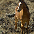 Young Wild Mare   #0307 by J L Woody Wooden