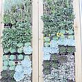 Your Garden Wall by Judy Hall-Folde