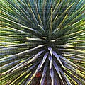 Yucca At The Arboretum by Tom Janca