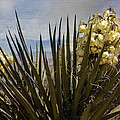 Yucca Blooms by Linda Dunn