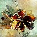 Yucca Pod - Barbara Chichester by Barbara Chichester