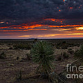 Yucca Sunset by Mike  Dawson