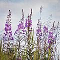 Yukon State Flower by Priska Wettstein