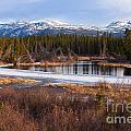 Yukon Taiga Wetland Marsh Spring Thaw Canada by Stephan Pietzko