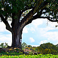 Yum Yum Tree by Maureen E Ritter