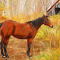 Yuma- Stunning Horse In Autumn by Lourry Legarde