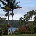 Yungaburra Lake View by Carol Ailles