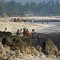 Zanzibar Beach 14 by Giorgio Darrigo