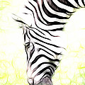Zebra Art by Steve McKinzie