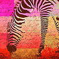 Zebra Art - T1cv2blinb by Variance Collections