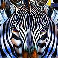 Zebra Dreams by Reggie Duffie