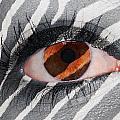 Zebra Eye by Paul Fell