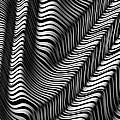 Zebra Folds by John Edwards