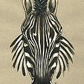 Zebra Front by Konni Jensen