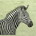 Zebra by James W Johnson