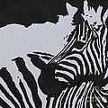 Zebra by John Halliday
