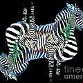 Zebra   by Lilliana Mendez
