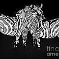 Zebra Love 1 by Karen Larter