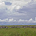 Zebra Panorama - 12x64 by J L Woody Wooden