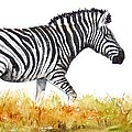 Zebra Panoramic by Patricia Beebe