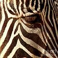 Zebra Patterns by Bob and Jan Shriner