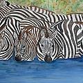 Zebra Pool by Patricia Beebe
