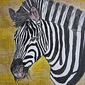 Zebra Portrait by Kathy Marrs Chandler