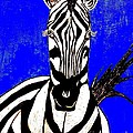 Zebra Portrait by Saundra Myles
