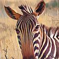 Zebra by Rob Corsetti
