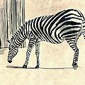 Zebra Stripes by Clara Sue Beym
